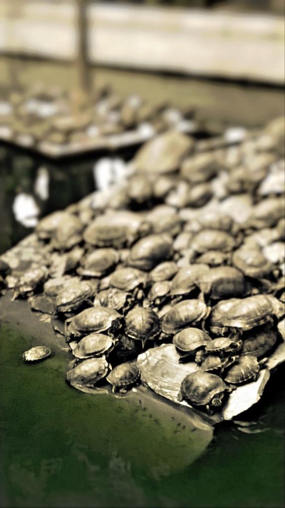 Turtles, Quartz Filter