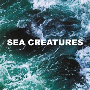 sea creatures cover